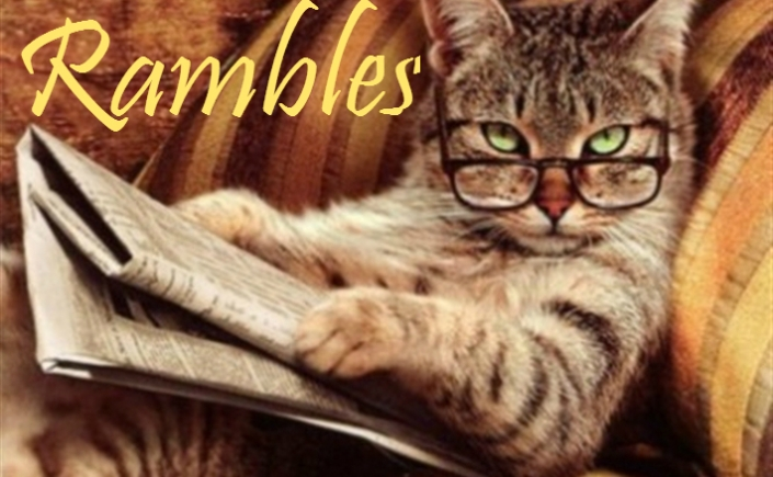 cat, kitten, reading, book, ramble, cat fun, cute, animal, fluffy, animals reading, glasses,