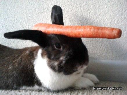 bunny unicorn, rabbit unicorn, al-mi'raj, legend, myth, animal, carrot, black, white,