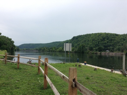 river, water, grass, geese, riverside, pretty spot, blogger, writer, adventurer, travel, author, reading, books,
