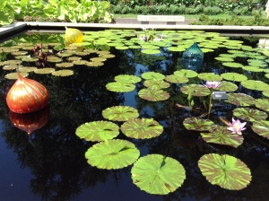 St. Louis botanical gardens, plants, rare, cool, books, author blog, writer, YA, MG, fantasy read, summer fun, adventure, travels, journey, life, lily pads, pond, lily,