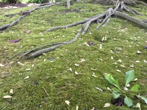 moss, moss garden, St. Louis botanical gardens, plants, rare, cool, books, author blog, writer, YA, MG, fantasy read, summer fun, adventure, travels, journey, life,