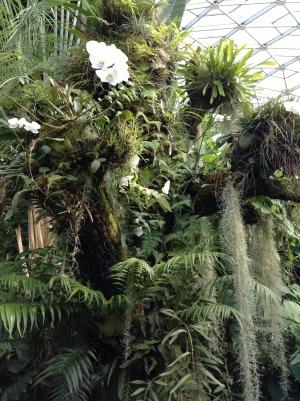 St. Louis botanical gardens, plants, rare, cool, books, author blog, writer, YA, MG, fantasy read, summer fun, adventure, travels, journey, life, orchids, trees,