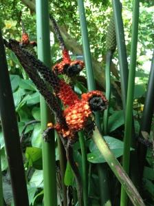St. Louis botanical gardens, plants, rare, cool, books, author blog, writer, YA, MG, fantasy read, summer fun, adventure, travels, journey, life, orange, flower, weird,