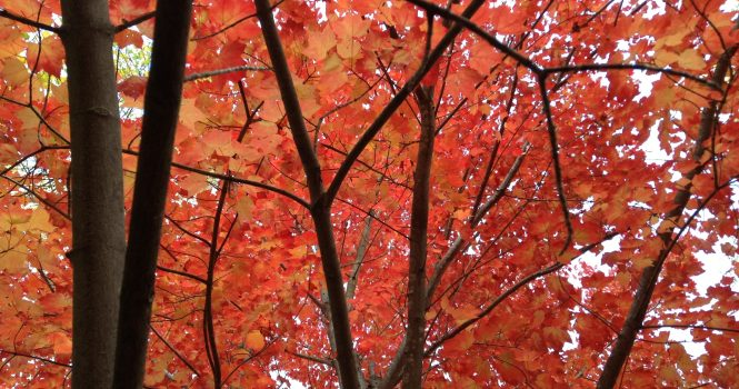 autumn, fall, beauty, trees, red, forest, woods, elf, nature, SFF, books, reading, writing, story, author blog, good reads,