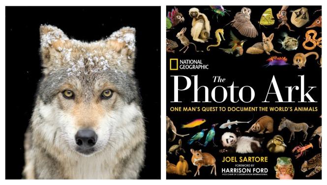Photo Ark, Joel Sartore, animals, photos, studio, art, wolf, monkey, birds, ocean life, animal ark, collection, zoos, frog, cat, cheetah, fish, snake,