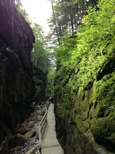 flume gorge, gorge, chasm, green, trees, rock, wall, plants, path, trail, walk, moss, ferns, mushrooms, nature, beauty, natural wonder, park, relaxation, travel, author blog, e rawls, writer, reading, am blogging,