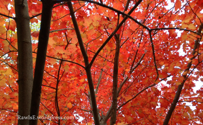 autumn, fall, beauty, trees, red, forest, woods, elf, nature, SFF, books, reading, writing, story, author blog, good reads, poem, poetry, am writing, am reading, am blogging, books,