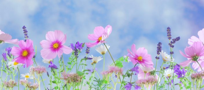 pink, flowers, blue, sky, memory, remembrance, death, loss, poem, poetry, am writing, writer, hope, faith, christian blog,